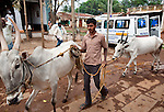 21 May 2013, Mandiganal Village, Karnartaka, India:  A local man walks his cattle past the mobile health clinic ambulance at Mandiganal Village outside Hubli. The World Bank is financing the Karnataka Health Systems Project that is bringing mobile health clinics to remote villages in Karnataka and covers the cost of an ambulance, a doctor, pharmacist, two nurses, a cleaner and a driver. Villagers have the opportunity to see a doctor once a week for basic services and will be referred to Primary Health Care centres for larger issues Picture by Graham Crouch/World Bank