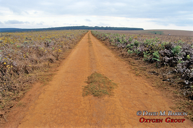 Road In Nyika National Park