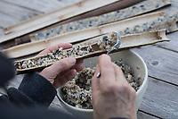 Hohle Pflanzenstängel für Vogelfutter, Stängel werden halbiert, um sie später mit Fettfutter zu füllen, Selbstgemachte Fettfuttermischung, Fettfutter aus Kokosfett, Sonenblumenkernen, Erdnussbruch, Körnermix, Körnermischung, Sonnenblumenöl, Vogelfutter selbst herstellen, Vogelfutter selber machen, Vogelfutter selbermachen, Vogelfütterung, Fütterung, bird's feeding. Sachalin-Flügelknöterich, Sachalin-Staudenknöterich, Russischer Staudenknöterich, Flügelknöterich, Staudenknöterich, Sachalin-Knöterich, junge Triebe, Fallopia sachalinensis, Polygonum sachalinense, Reynoutria sachalinensis, Giant Knotweed, Sakhalin Knotweed