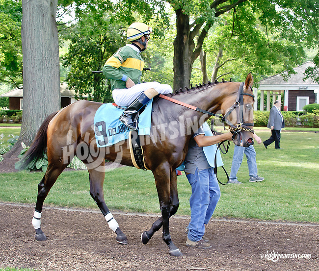 My T Swift before The Beautiful Day Stakes at Delaware Park on 7/3/14