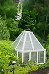 A vignette of a white-painted, square, Victorian-looking garden cloche in an herb garden setting, backed by white delphinium stalks  and lacy fennel stalks in soft focus behind, in this Sissinghurst-style white garden behind the farmhouse on this property about one hour north of Seattle in the Skagit Valley. Garden design by Toni Christianson, Christianson's Nursery