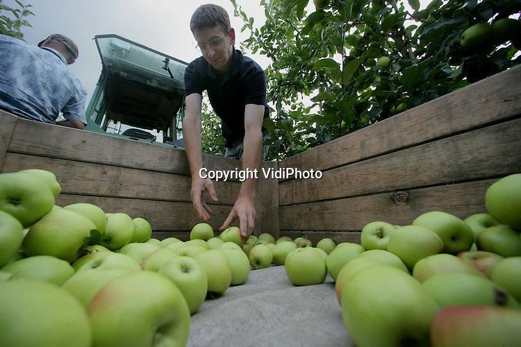 Foto: VidiPhoto..RESSEN - De appeloogst is begonnen. Bij fruitteler Nico van Olst uit het Betuwse Ressen worden maandag de eerste appels van de bomen gehaald. De Delbar is een bekende zomerappel. De eerste appels van Van Olst gaan overigens niet naar de veiling, maar worden in de eigen landwinkel verkocht.