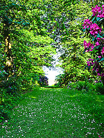 A grass path has been mown to create a walkway through the woods and rhododendron