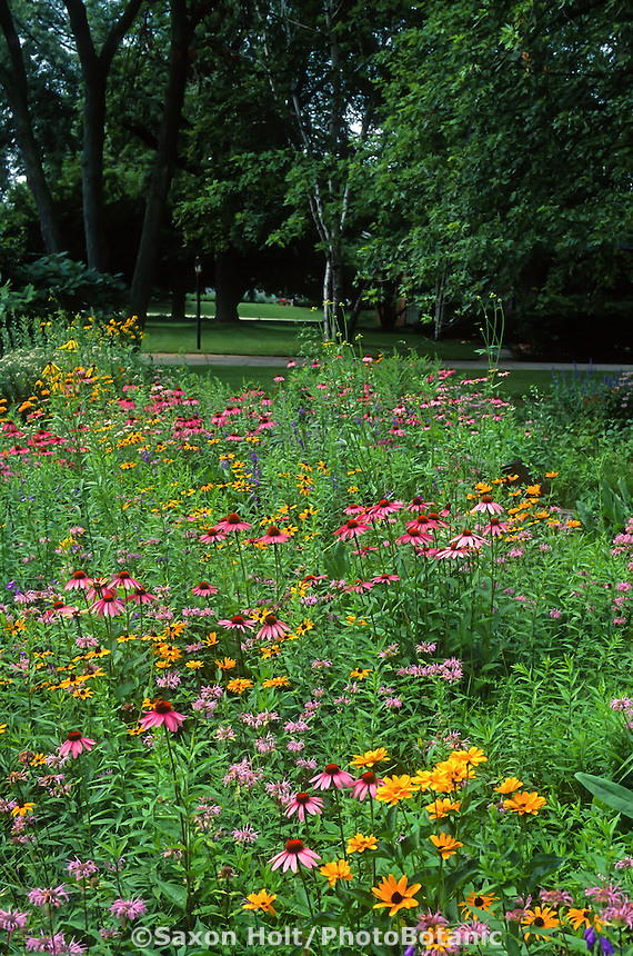 Echinacea, Monarda Heliopsis and Rudbeckia in perennial wildflower meadow front yard lawn substitute