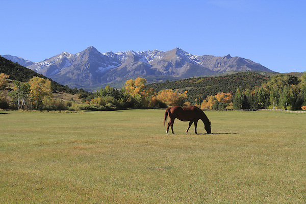 Getty Images, Horse grazing in a pasture near Telluride, Colorado.