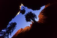 A virtical look at Trees in a narrow canyon in Bryce Canyon National Park, Utah, USA