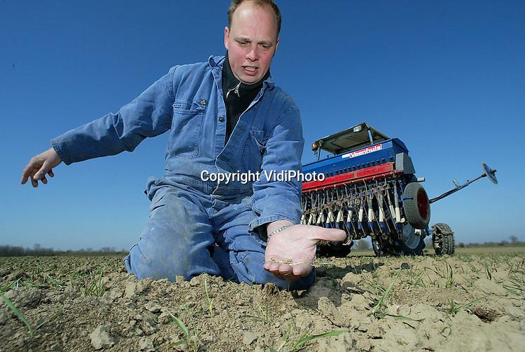 13la2..Foto: VidiPhoto..AERDT - Akkerbouwer Willem Eunk uit Aerdt zaait zijn wintertarwe door met zomertarwe. Door ganzenvraat en uitwintering is een deel van zijn wintertarwe verloren gegaan. Foto: Door uitwintering losgeraakte tarweplantjes.