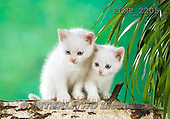 Marek, ANIMALS, REALISTISCHE TIERE, ANIMALES REALISTICOS, cats, photos+++++,PLMP2205,#a#