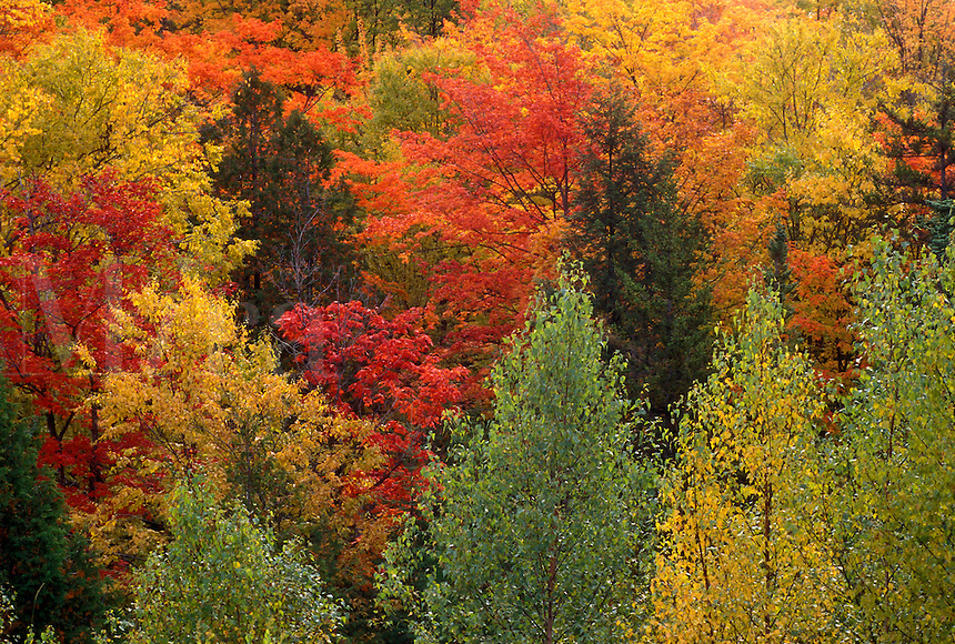 Fall color.