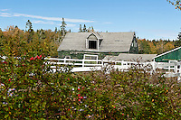Abandoned barn, Mount Desert Island, Maine, ME, USA