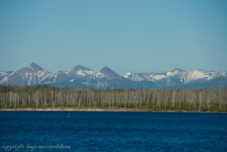 Lake Yellowstone landscape