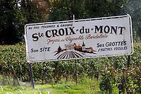 Vineyard. Sainte Croix du Mont, Entre deux Mers. Bordeaux, France