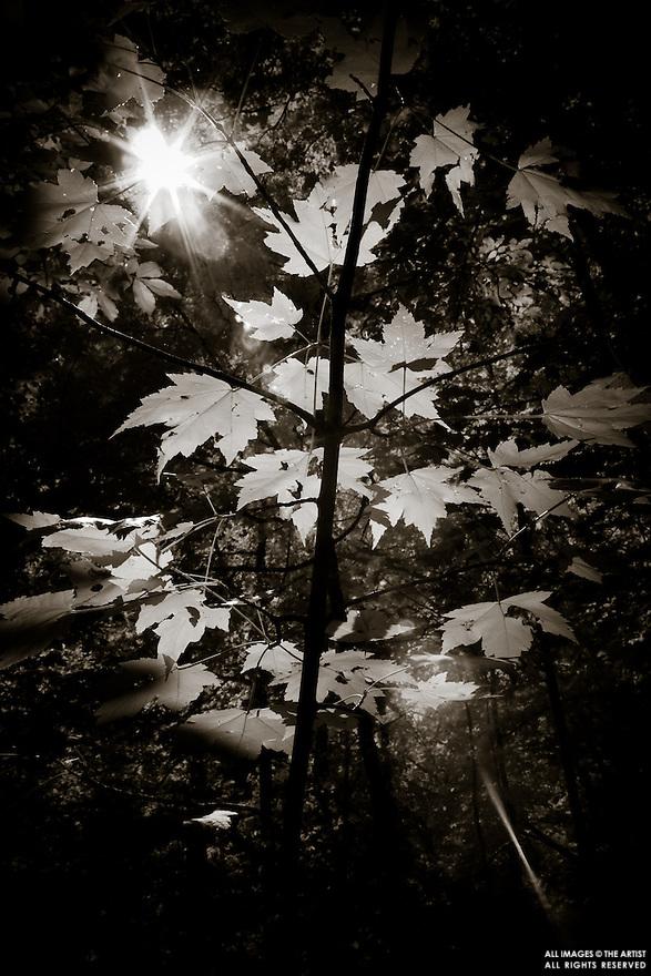 Infrared Scenic.9/1/2007