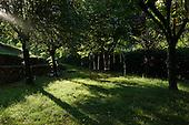 La Cigal<br /> Flaviac, Ardeche<br /> France<br /> August 9, 2011<br /> <br /> Swings.