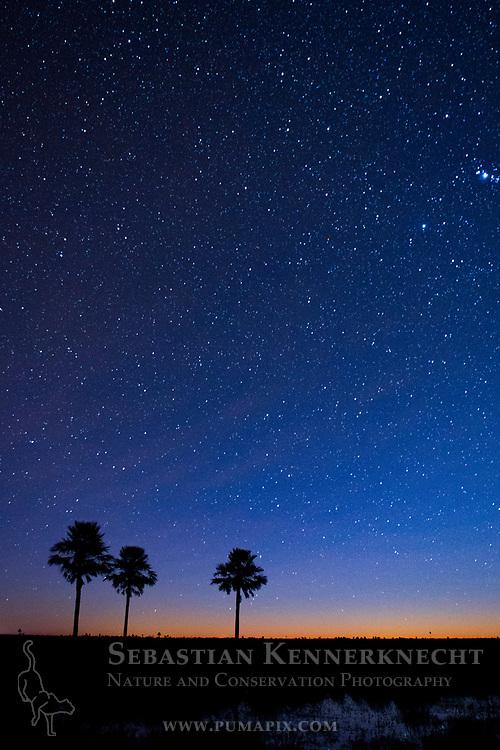 Palms at night, Ibera Provincial Reserve, Ibera Wetlands, Argentina