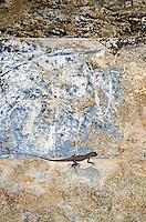Lizard on wall