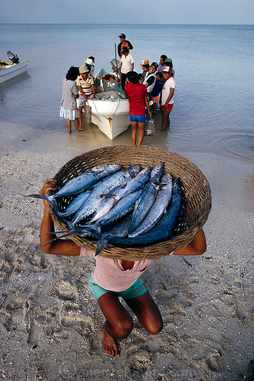 Fresh mackerel catch in Campeche, Mexico. (From a photographic gallery of fish images, in Hungry Planet: What the World Eats, p. 205).
