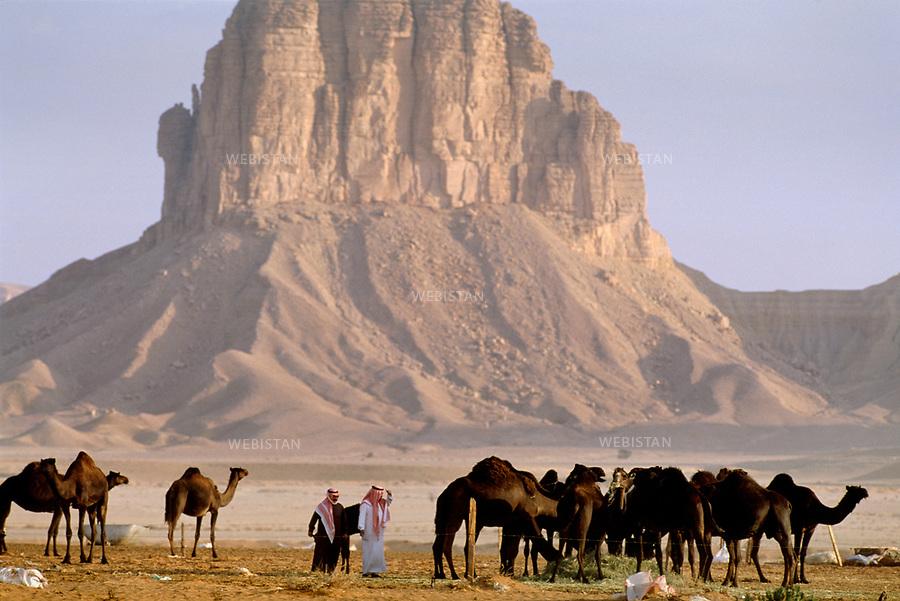 2003. Saudi Arabia. Herd of camels in the desert. Arabie saoudite. Troupeau de chameaux dans le dÈsert.