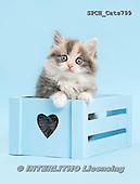 Xavier, ANIMALS, REALISTISCHE TIERE, ANIMALES REALISTICOS, cats, photos+++++,SPCHCATS799,#a#
