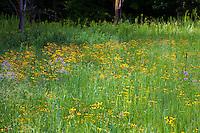 Crow-Hassan Park, prairie reserve