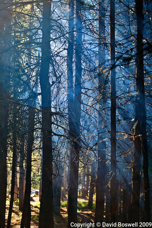 Smoke in the forests of Yellowstone National Park highlight the sun beams shining down through the trees.