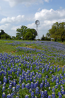 Windmill with Bluebonnets