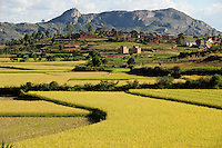 MADAGASCAR Morarano , paddy fields /MADAGASKAR Morarano , Reisfelder