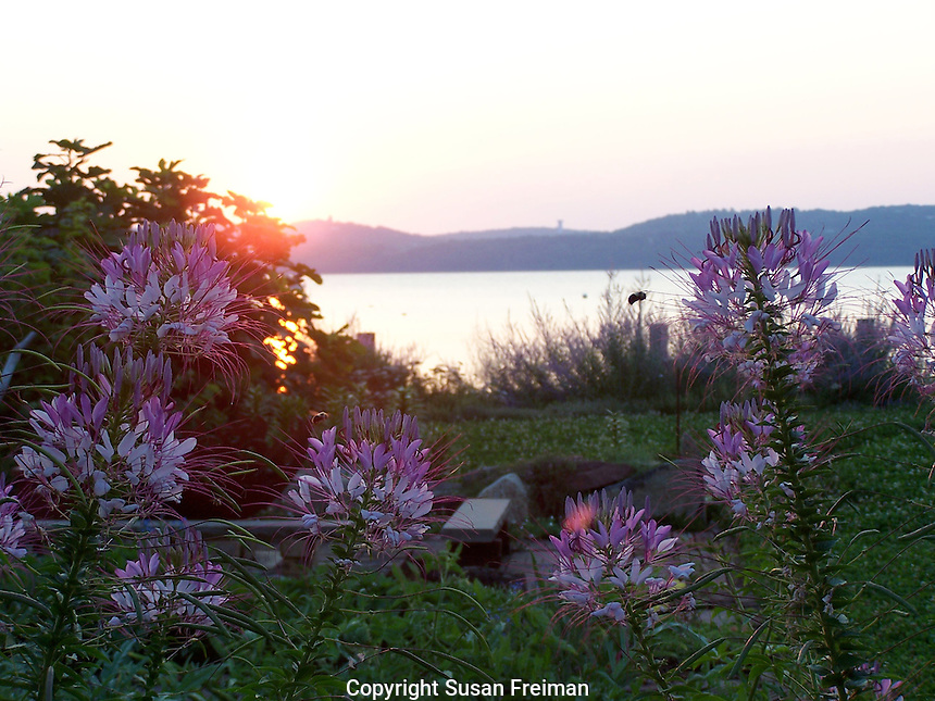 Sunrise, July, Joan Gussow's garden