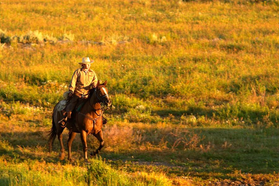 Woman on horseback riding through pasture, Triangle X Ranch, Grand Teton National Park, Teton County, Wyoming, USA
