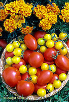HS09-058c  Tomato - gold nugget, early cascade, celebrity varieties