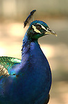 © 2003 -- Ron Reznick.http://www.digital-images.net..[#Beginning of Shooting Data Section].Nikon D1H..Focal Length: 200mm..White Balance: Cloudy..Color Mode: Mode II (Adobe RGB)..2001/04/13 05:32:11.2..Exposure Mode: Aperture Priority..AF Mode: AF-C..Hue Adjustment: 0°..RAW (12-bit) ..Metering Mode: Multi-Pattern..Tone Comp: Less Contrast..Sharpening: None..Image Size:  2000 x 1312..1/100 sec - f/4..Flash Sync Mode: Not Attached..Noise Reduction: ..Color..Exposure Comp.: +0.7 EV..Image Comment: ..[#End of Shooting Data Section].