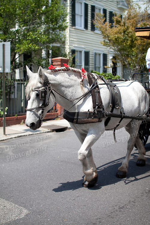 Horse Drawn Carriage Downtown Charleston SC