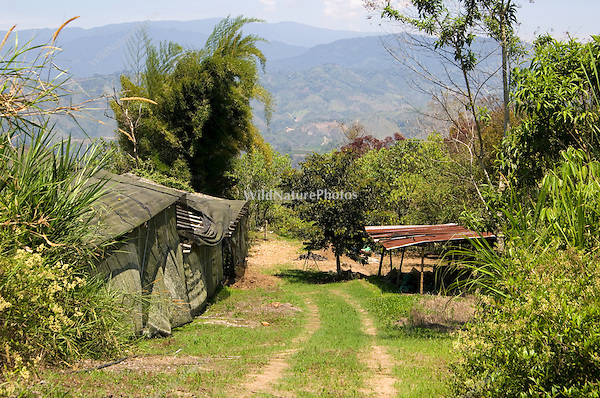 Shade Coffee Plantation, Finca de Investigacion Argo Ecologica Orongo, Pichincha Province, Ecuador