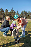 USA, Oregon, Bend, young kids get to pet the farm animals at the annual pumpkin patch located in Terrebone near Smith Rock State Park