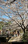 Kyoto Scenics