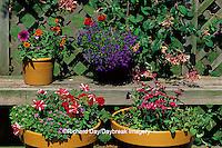63821-05414 Honeysuckle on trellis, containers with Petunias, Zinnia Profusion, Ageratum, Dianthus, Blue Lobelia, Red Verbena  Marion Co.  IL
