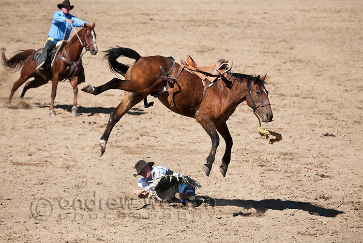Saddle bronc rider is bucked off his horse.  Mareeba Rodeo, Mareeba, Queensland, Australia