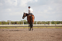 Michael Matz watching his horses on the track at Palm Meadows.Boynton Beach Florida. 03-01-2012