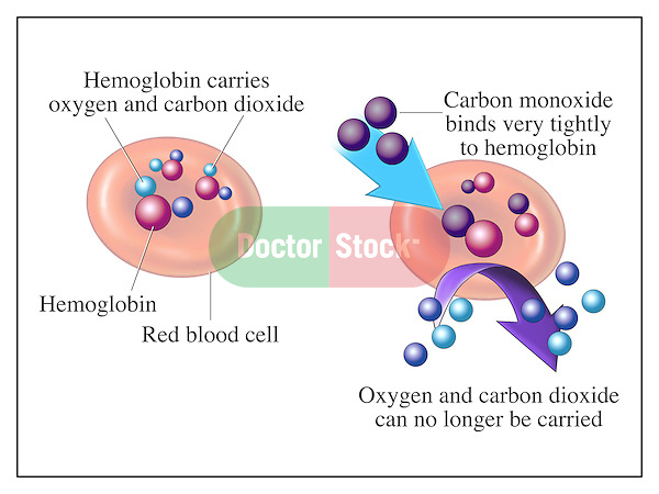 Carbon Monoxide Binding to Hemoglobin on a red blood cell (RBC) during respiration or breathing.