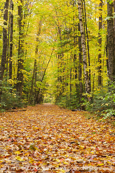 Lincoln Woods Trail during the autumn months in Lincoln, New Hampshire USA. This trail follows the old East Branch & Lincoln Railroad bed.