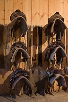 Europe/France/Picardie/80/Somme/Baie de Somme/ St-Quentin-en-Tourmont:Sellerie de l' Espace Equestre Henson-Marquenterre