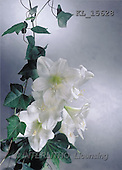 Interlitho, Erica, SYMPATHY, photos, white lilies(KL15628,#T#) Beileid, condolación
