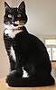 Portrait of a Cat.<br /> <br /> Stock Photo by Paddy Bergin