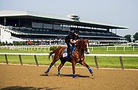 ELMONT, NY - JUNE 08: Justify with Humberto Gomez aboard gallops in preparation for the 150th Belmont Stakes at Belmont Park on June 08, 2018 in Elmont, New York. (Photo by Alex Evers/Eclipse Sportswire/Getty Images)