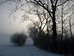 Wheel Tracks In The Winter Snow, Trees And Bushes In Silhouette Against The Morning Sun And Fog, Southwestern Ohio, USA : Low Res File - 8X10 To 11X14 Or Smaller, Larger If Viewed From A Distance