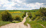 Path crossing chalk downland on Roundway Down, Devizes, Wiltshire, England
