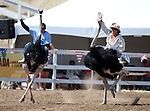 Brade Emmans and Kristy Bond race in an ostrich race during the 54th International Camel Races in Virginia City, Nev., on Friday, Sept. 6, 2013.  <br /> Photo by Cathleen Allison