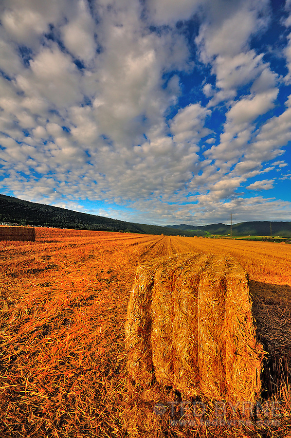 Harvested field with a hay bale (Val-de-Ruz, Neuchâtel)