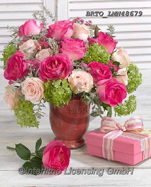 Alfredo, FLOWERS, BLUMEN, FLORES, photos+++++,BRTOLMN48679,#f#, EVERYDAY ,rose,roses
