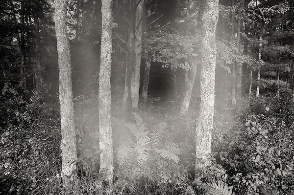 tendril of fog evaporating